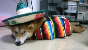 Mexikoume