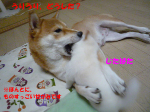 Shitsuke4_2