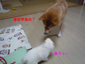 Shitsuke5